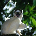 Natural Attractions in Madagascar