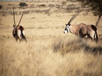 Top Natural Wonders in Botswana