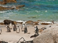Family Attractions in Cape Town