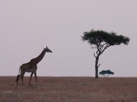 Off-the-beaten-path safaris in Africa