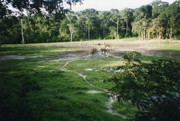 forest in Central Africa