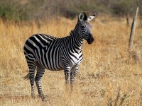 Tanzania's Best Wildlife Destinations